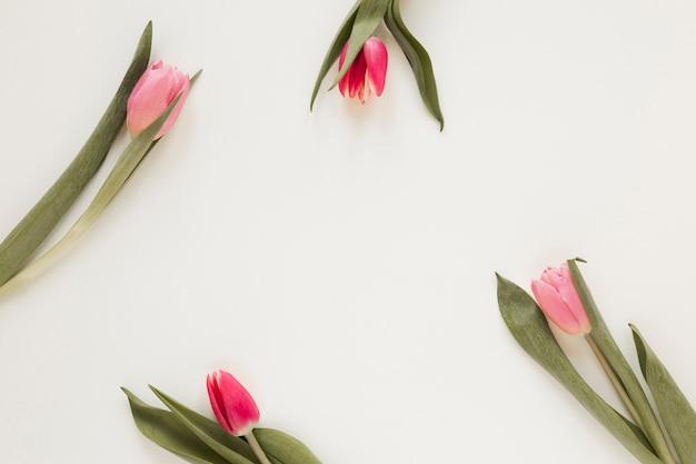 Arranjo de flores e folhas de tulipa Foto gratuita