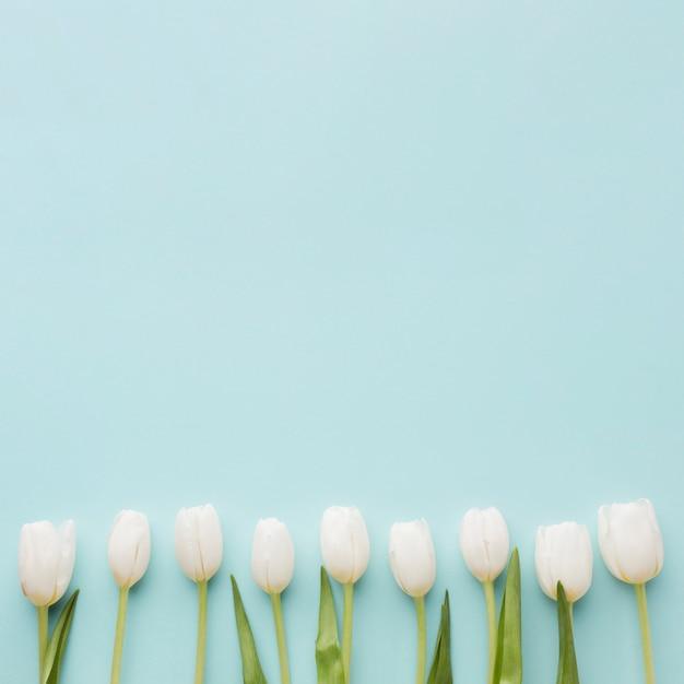 Arranjo de flores tulipa branca sobre fundo de espaço azul cópia Foto gratuita