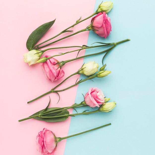 Arranjo de mini rosas brancas e rosa plana leigos Foto Premium