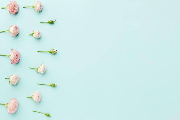 Arranjo de moldura de rosas pequenas com espaço de cópia no fundo azul Foto gratuita