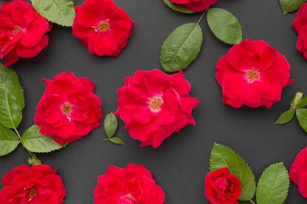 Arranjo de rosas de iceberg de vista superior Foto Premium