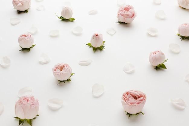 Arranjo de rosas e pétalas vista alta Foto gratuita