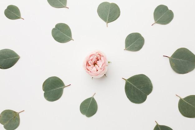 Arranjo de vista superior de folhas verdes e rosa no meio Foto gratuita