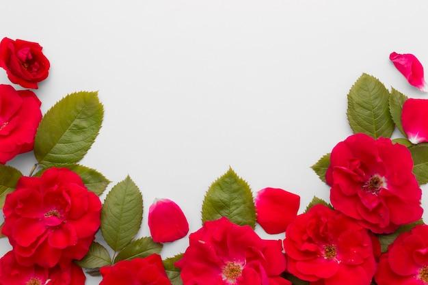 Arranjo liso leigo de rosas de iceberg Foto gratuita
