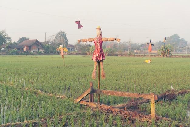 Arroz paddy, campo, em, tailandia Foto Premium