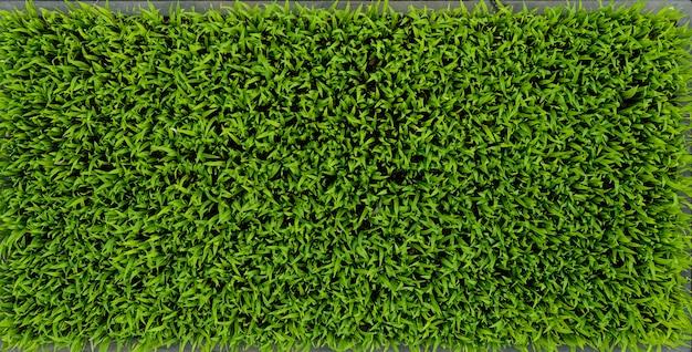 Arroz verde, seedlings, folha, cornfield, natureza, fundo Foto Premium