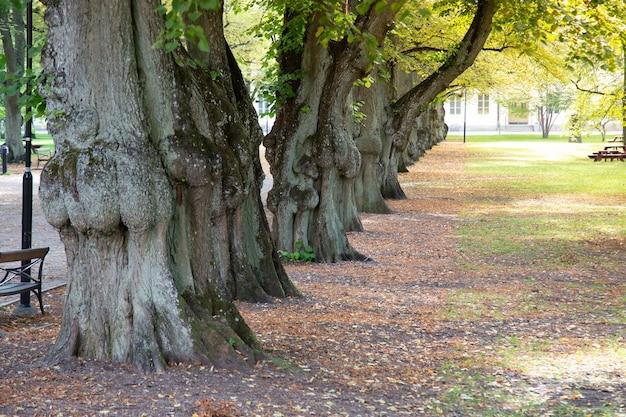 Árvore alinhada no parque da cidade. Foto Premium