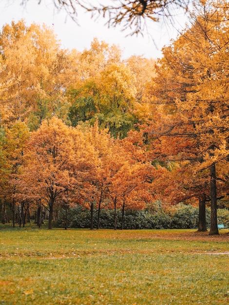 Árvore amarela de outono em um parque Foto Premium