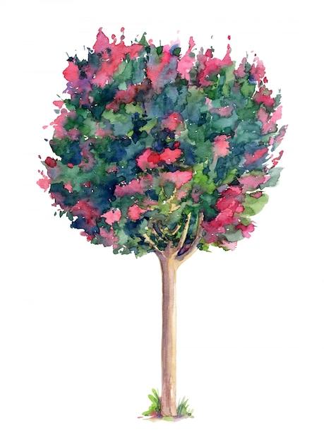 Árvore bonita de lagerstroemia (murta de crepe). aquarela mão ilustrações desenhadas isoladas Foto Premium