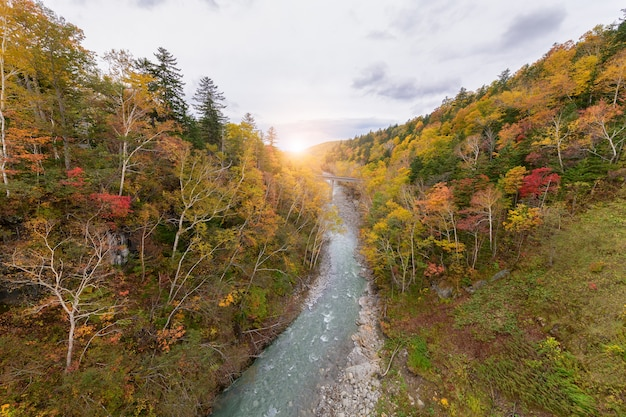 Árvore colorida no outono perto da cachoeira de shirahige Foto Premium