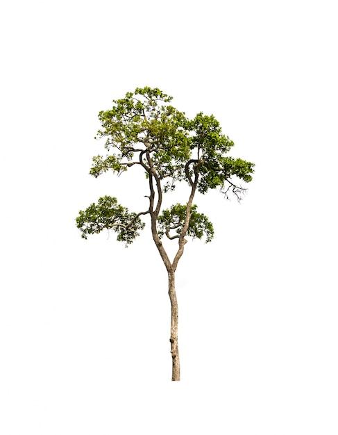 Árvore com um fundo branco Foto gratuita