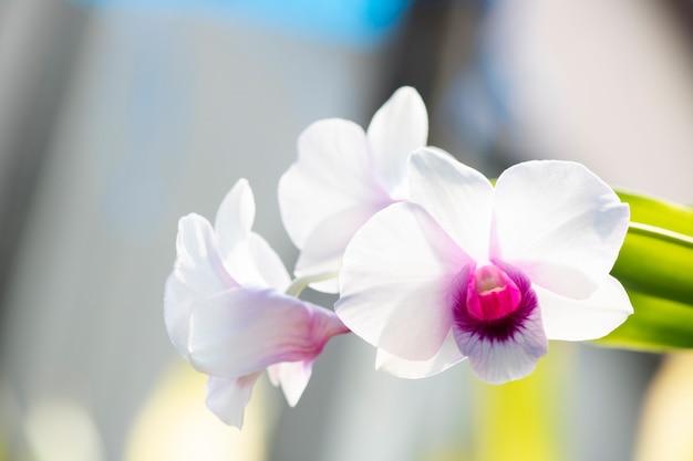 Árvore de orquídea branca em natural close-up Foto Premium