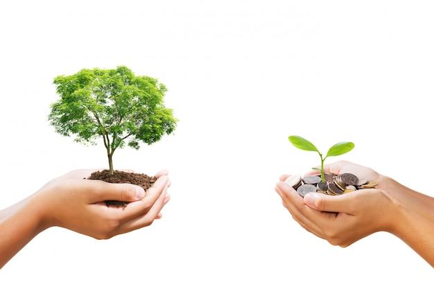 Árvore jovem que cresce na pilha de dinheiro na mão isolado Foto Premium