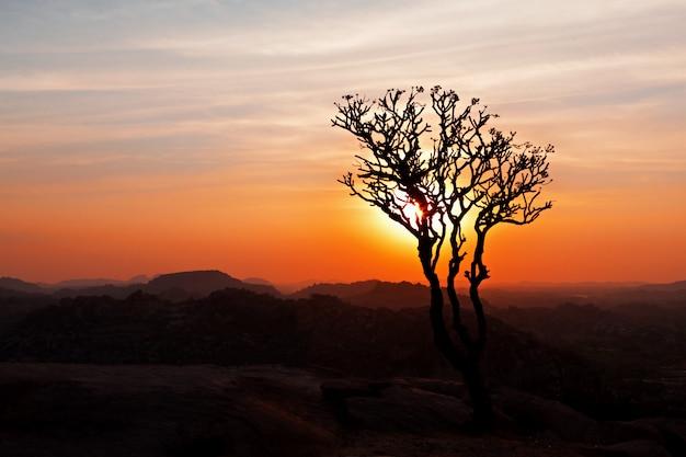 Árvore no céu do sol Foto Premium