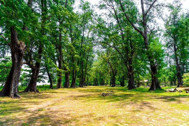 Árvore no parque nacional em phuket, tailândia Foto Premium