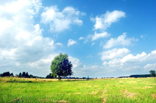 Árvore no prado em um dia ensolarado Foto gratuita
