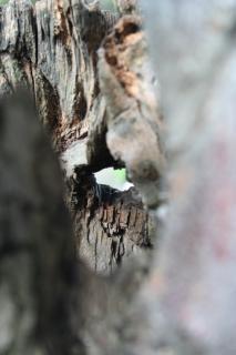 Árvore oca, closeup Foto gratuita
