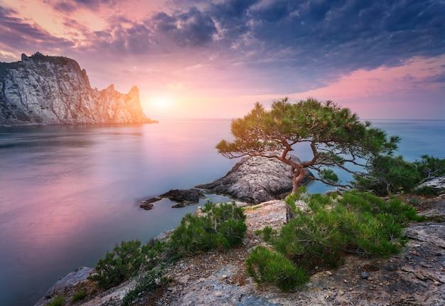 Árvore que cresce da rocha ao pôr do sol Foto Premium