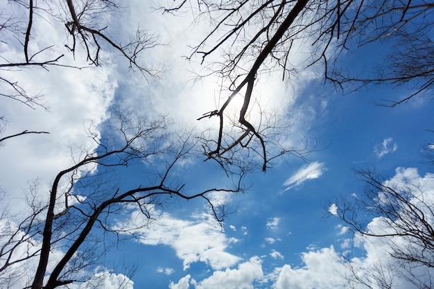 Árvore seca ou galhos de árvores mortas no céu e nuvens Foto Premium