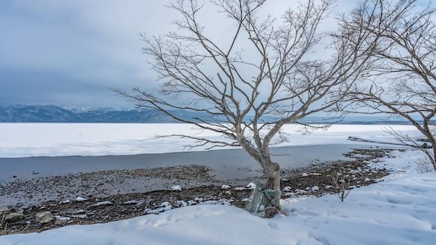 Árvore sem folhas na paisagem de inverno Foto Premium