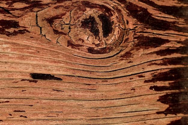 Árvore velha de close-up com textura de design Foto gratuita