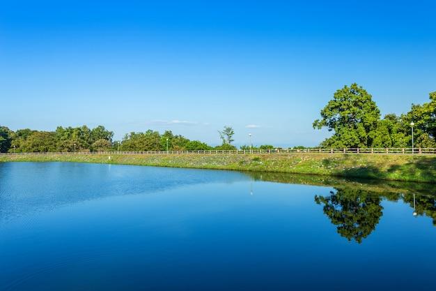 Árvore verde do reservatório da opinião da estrada e fundo do céu azul. Foto Premium