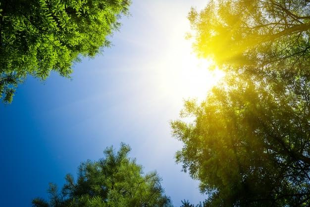 Árvore Foto gratuita