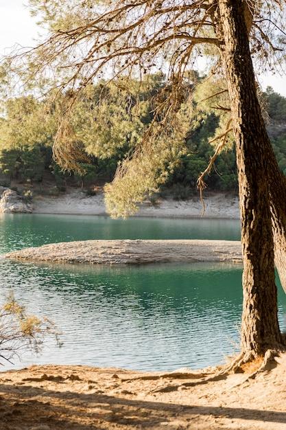 Árvores à beira do lago durante o dia Foto gratuita