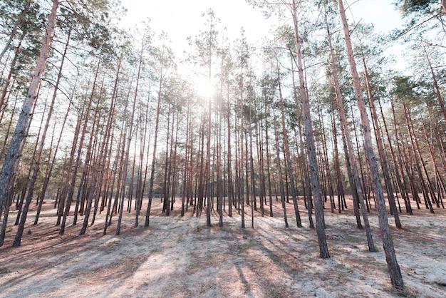 Árvores altas verdes na floresta Foto gratuita