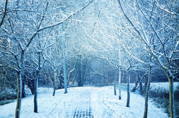 Árvores cobertas de neve Foto gratuita