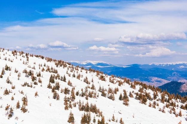 Árvores coníferas sobre a montanha coberta de neve Foto gratuita