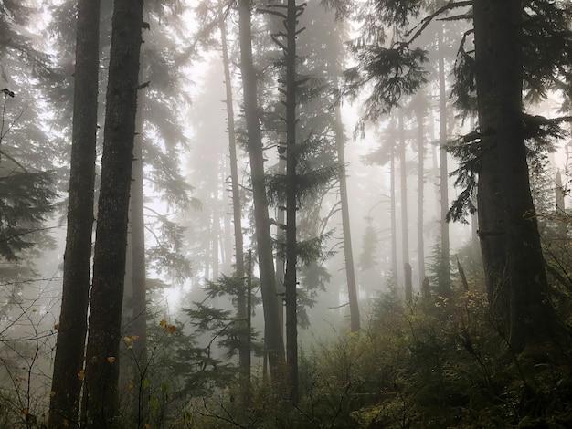 Árvores da floresta cobertas de névoa em oregon, eua Foto gratuita