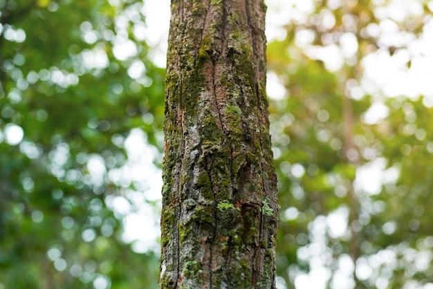 Árvores da floresta Foto Premium