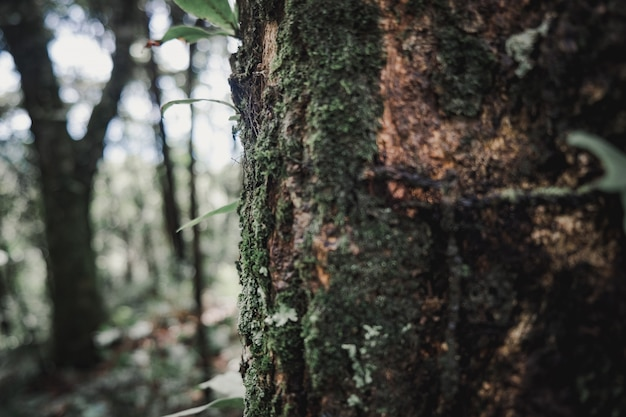 Árvores da natureza que criam uma ilha cheia de árvores. Foto Premium