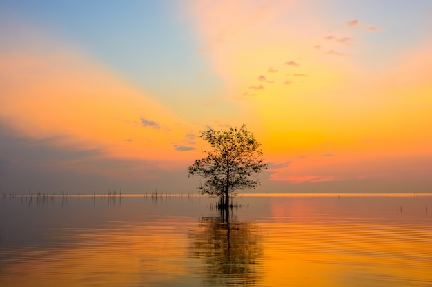 Árvores de mangue no lago com céu colorido no nascer do sol na aldeia de pakpra, phatthalung, tailândia Foto Premium
