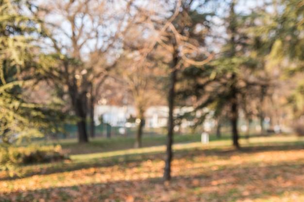 Árvores de outono turva no jardim Foto gratuita