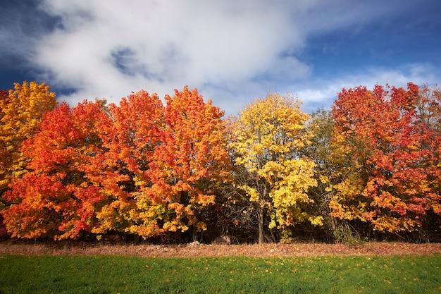 Árvores de outono vermelhas e amarelas contra o céu azul Foto Premium
