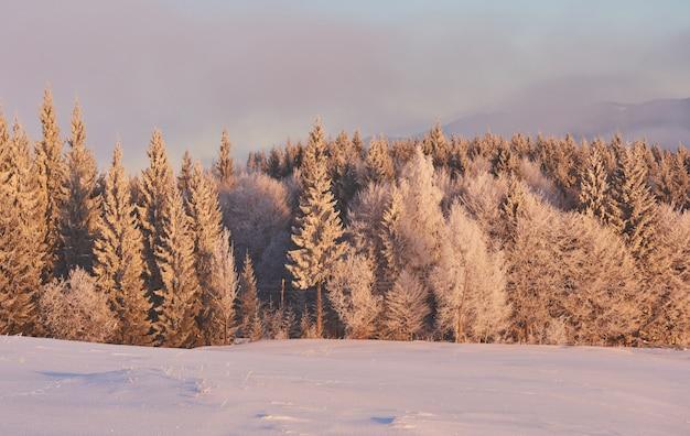 Árvores de paisagem de inverno, fundo com alguns destaques sof e flocos de neve Foto gratuita