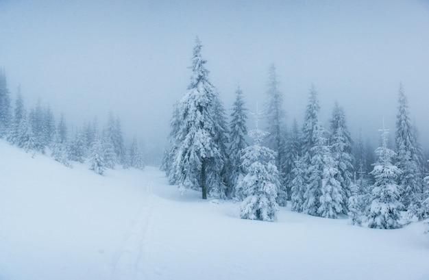 Árvores de paisagem de inverno no gelo e no nevoeiro. Foto gratuita