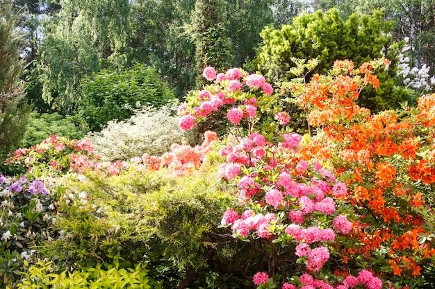 Árvores decorativas. arbustos e flores no jardim Foto Premium