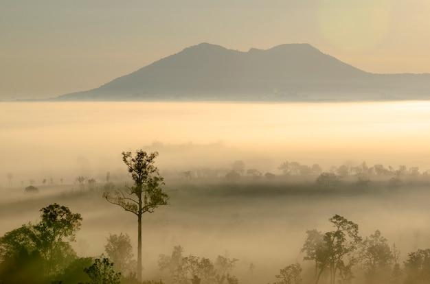 Árvores e montanhas com o céu e o sol da manhã no parque nacional Foto Premium
