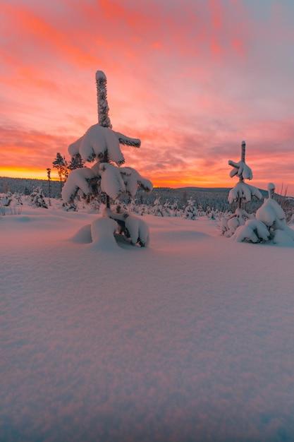Árvores e o campo coberto de neve sob o incrível céu colorido na noruega Foto gratuita