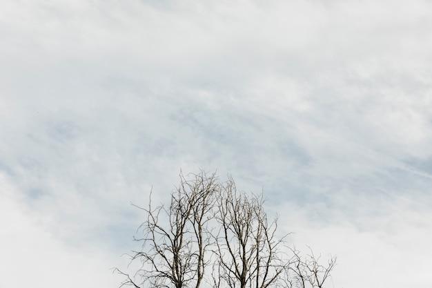 Árvores em um céu nublado Foto gratuita