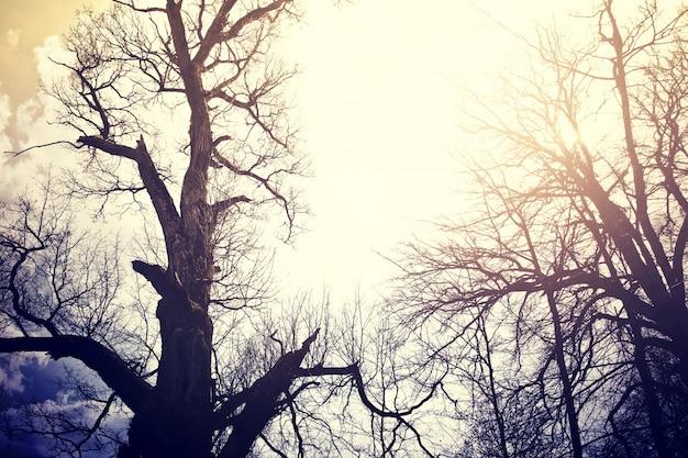 Árvores mortas antigas sobre o céu. Foto gratuita