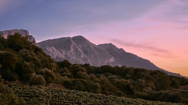 Árvores na colina com montanhas ao longe sob um céu azul Foto gratuita