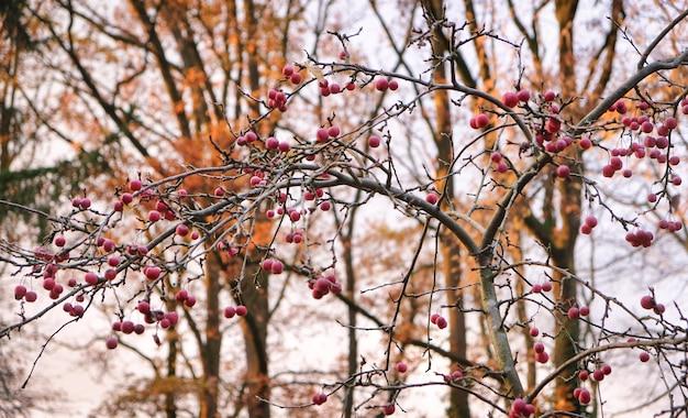 Árvores no outono com céu holandês Foto Premium