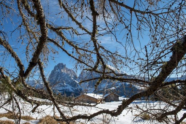 Árvores sem folhas em uma paisagem de neve cercada por muitos penhascos nas dolomitas Foto gratuita