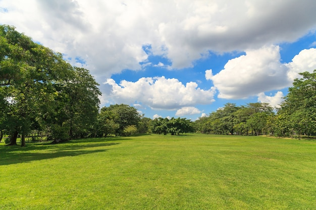 Árvores verdes no belo parque Foto Premium