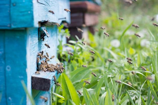 As abelhas carregam néctar para a colmeia Foto Premium