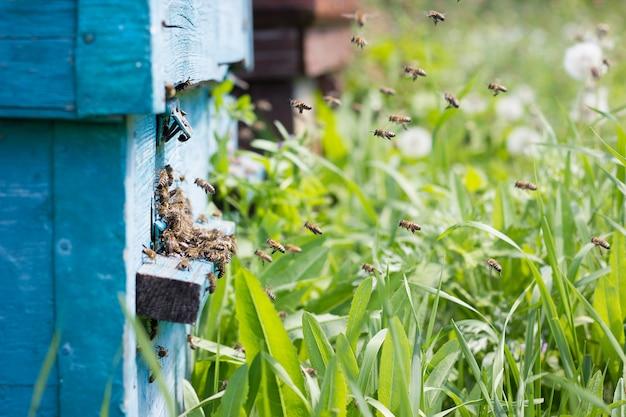 As abelhas carregam o néctar para a colméia. Foto Premium